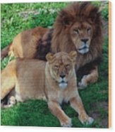 Lion Pair Wood Print