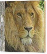 Lion Portrait Wood Print