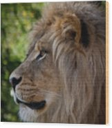 Lion Portrait Of A Leader Wood Print