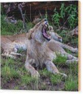 Lion Roar/2 Wood Print