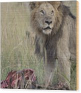 Lion With Kill Wood Print