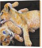 Lion Wrestling Wood Print