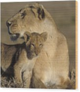 Lioness And Her Cub  Wood Print