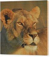 Lioness At Maasai Sunet Wood Print