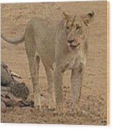 Lioness At The Kill Wood Print