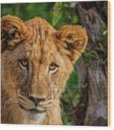 Lioness Cub Wood Print