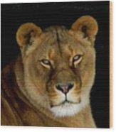 Lioness. No.2 Wood Print
