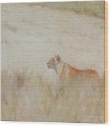Lioness - Scent Ahead Wood Print