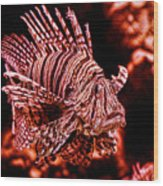 Lionfish Of The Sea Wood Print