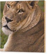 Lions Beauty Wood Print