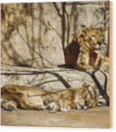 Lions Den Wood Print