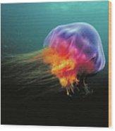 Lions Mane Cyanea Capillata Jellyfish Wood Print