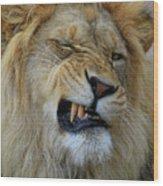 Lions Wink Wood Print