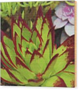 Lipstick Or Echeveria Agavoides At Balboa Park Wood Print