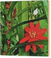 Lipstick Plant Flower Wood Print