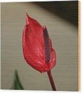 Lipstick Red Wood Print