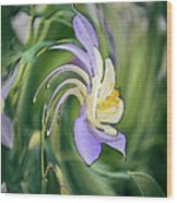 Liquid Columbine Wood Print