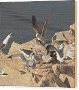 Listen Up Gulls Wood Print