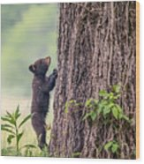 Little Bear Big Tree Wood Print