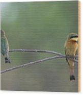 Little Bee-eaters Wood Print