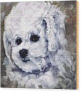 Little Bichon  Wood Print