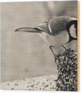 Little Bird Feeding Wood Print