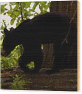 Little Black Bear Wood Print