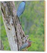 Little Blue And Green Heron Wood Print