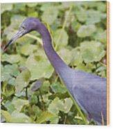 Little Blue At De Leon Springs Wood Print