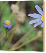 Little Blue Daisies Wood Print