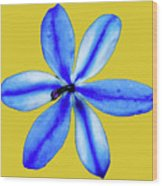 Little Blue Flower On A Yellow Background Wood Print