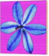 Little Blue Flower On Dark Pink Wood Print