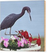 Little Blue Heron In Flower Pot Wood Print