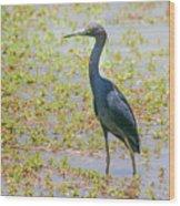 Little Blue Heron In Weeds Wood Print