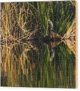 Little Blue Heron Wood Print
