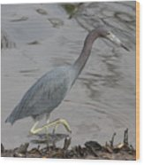 Little Blue Heron Walking Wood Print