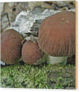Little Brown Mushrooms In Moss Wood Print