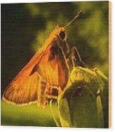 Little Brown Skipper Butterfly Wood Print