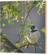 Little Chickadee In The Pink Wood Print