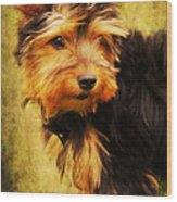 Little Dog II Wood Print by Angela Doelling AD DESIGN Photo and PhotoArt