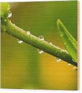 Little Drops Of Rain Wood Print