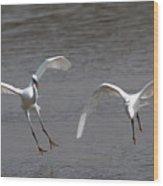 Little Egrets In Flight Wood Print