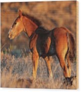 Little Filly Wood Print