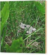 Little Frog Big Voice Wood Print