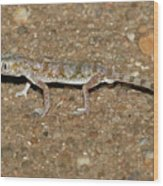 Little Gecko Wood Print