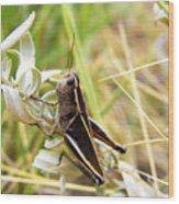 Little Grasshopper 2 Wood Print