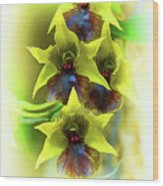 Little Green Apple Orchid On White Wood Print