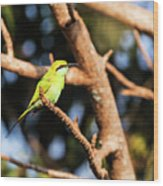 Little Green Bee Eater On A Branch Wood Print