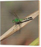Little Green Friend Wood Print
