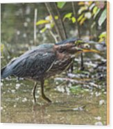 Little Green Heron With Fish Wood Print